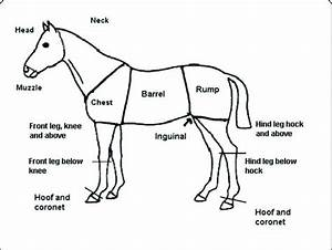 Sketch Of Horse Used For Injury Recording  Showing Names