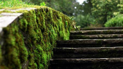 28 Fantastic Hd Moss Wallpapers