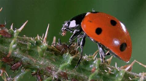 Lady Bug Tumblr