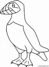 Puffin Pulcinella Coloring Colorare Disegno Mare Atlantic Uccelli Puffins Frailecillo Animali Vogel Verschiedene Immagine Pettirosso Malvorlagen Uccello Colorear Condividi Recommended sketch template