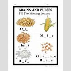 Grains And Pulses  Wheat, Learn About Wheat, Wheat Lessons, Wheat Printables, Wheat Worksheets