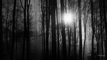 Woods Dark Into Wallpapers Wood Desktop Background
