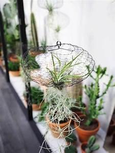 Tillandsien Im Glas : tillandsien im glas pflege ~ Eleganceandgraceweddings.com Haus und Dekorationen