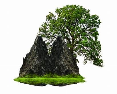 Rock Grass Tree Clipart Transparent Nature Background