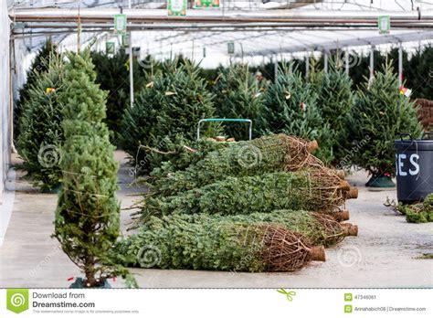 tree farm business plan