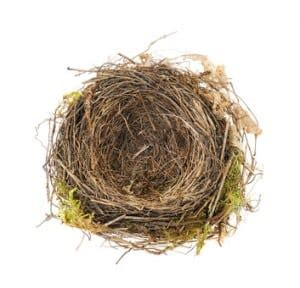 Nest Syndrom by Empty Nest 3 Signs And Helpful Tips For Coping