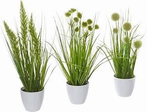 Grünpflanzen Im Topf : home affaire kunstpflanze gras im topf 3er set otto ~ Michelbontemps.com Haus und Dekorationen