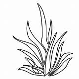 Coloring Plants Pages Plant Drawing Seaweed Grass Underwater Sea Ocean Clipart Shrubs Colouring Kelp Pencil Draw Printable Aquatic Outlines Seagrass sketch template
