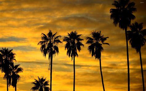palm tree silhouette  sunset wallpaper nature