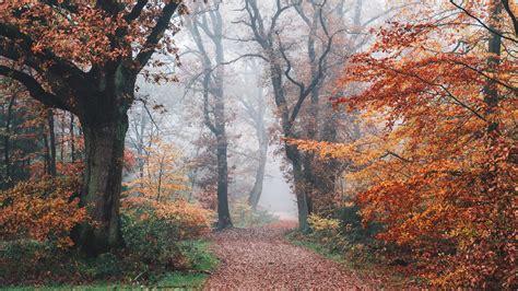 Autumn Wallpaper 4K, Forest, Fall Foliage, Trees, Foggy ...