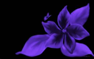 Purple And Black Butterfly Background