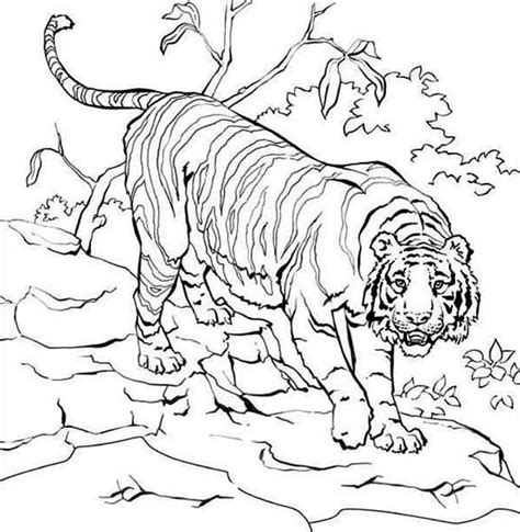 Coloring Harimau by How To Draw Tiger On Tree Da Ara Color Me Fauna