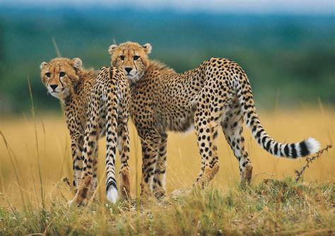 Endangered species of animals endangered species