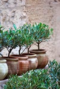 Olivenbaum Im Topf : olivenbaum auf dem balkon so gedeiht er pr chtig ~ Michelbontemps.com Haus und Dekorationen