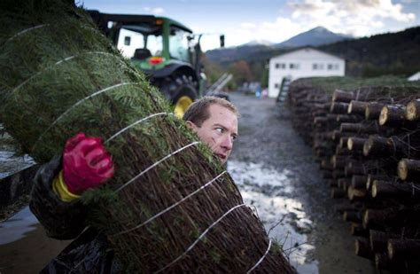 pine meadows christmas tree farm in photos where your tree was born the globe and mail