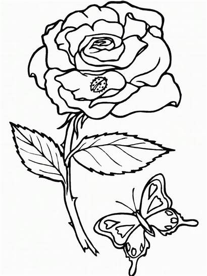 Coloring Pages Printable Rose Roses
