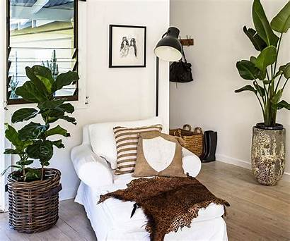 Indoor Plants Styling Caring Buying Plant Guide
