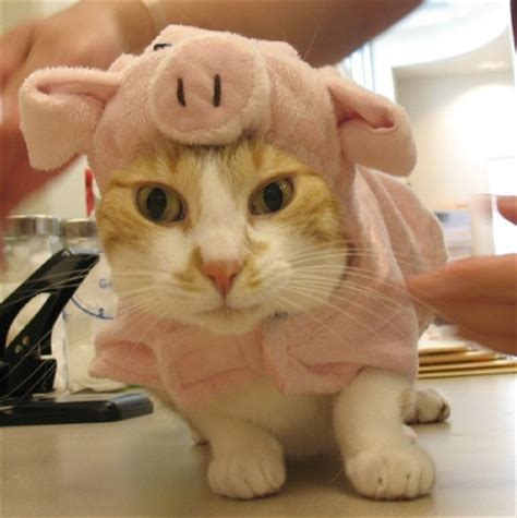 purr fect reasons  dress   cat