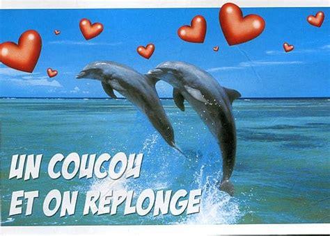 image dauphin avec coeur
