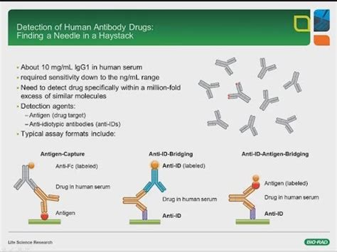Developing Recombinant Anti Idiotypic Antibodies for PK/PD ...