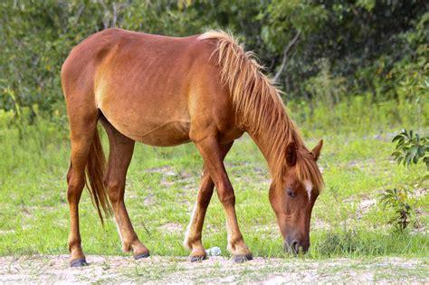wild horses calm grass horse mustang banks outer spanish dunes adventures been cradle calmcradle