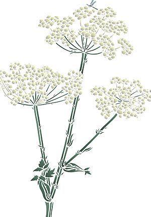 giant hogweed images  pinterest dandelions