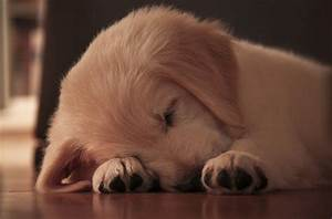 Cute Sleeping Puppies | Sit Means Sit Dog Training Franchise