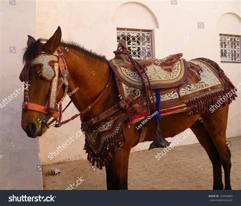 cheval arabe avec sa selle et harnachement traditionnel de fantasia stock photo 125920895