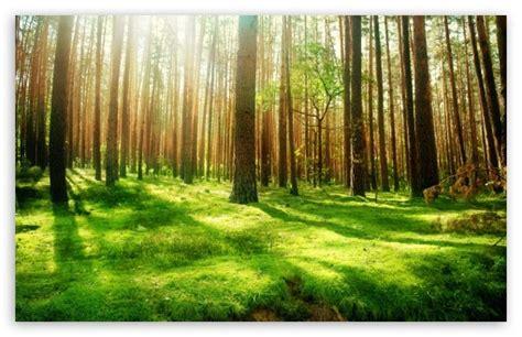 Beautiful Forest Scenery 4k Hd Desktop Wallpaper For 4k