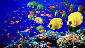 Animals fishes underwater swim coral reef colors bright ...