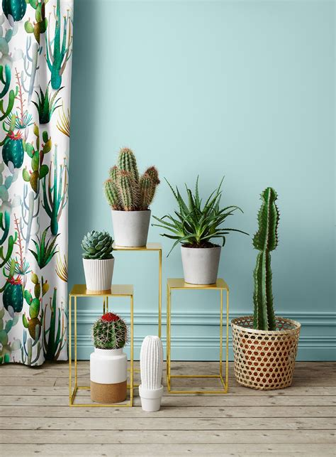plant used as decoration pin by opus grows on decorate cacti decoration and plants
