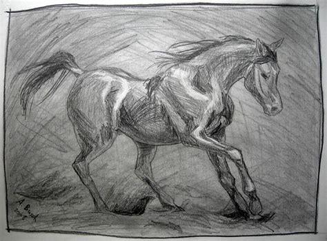 galoppierendes pferd pferde hengst zeichnungen tiere
