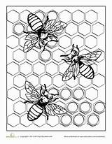 Bee Coloring Pages Honeycomb Worksheet Adults Bees Beehive Worksheets Grade Adult Insect Education Little Honey Sheets Bumble Printable Books Template sketch template