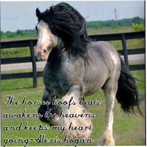 horses amazing horse rare animals gypsy most