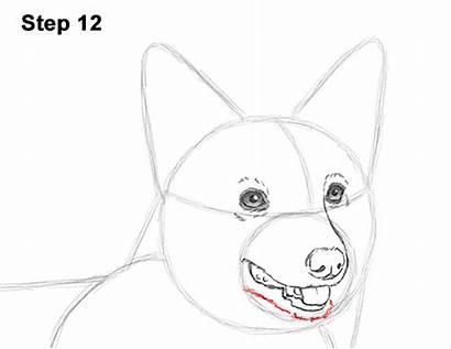 Corgi Draw Welsh Dog Drawing How2drawanimals Step