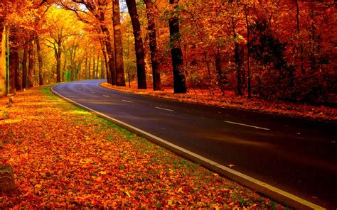 Autumn Roads Wallpapers by Autumn Road Uploaded To Curezone By Folliculitis On