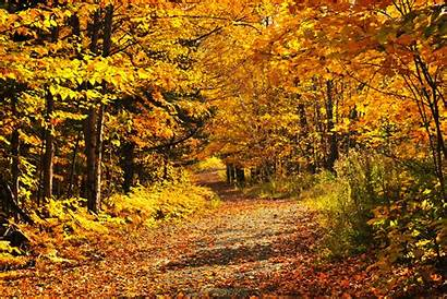 Fall Forest Seasons Autumn Leaves Giphy Wide