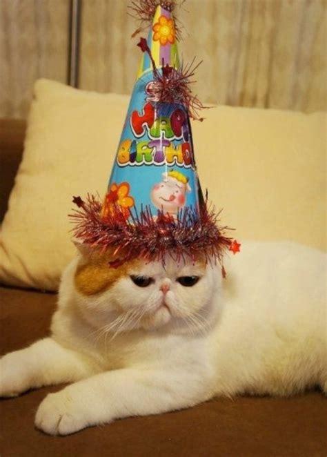 fashionable  worn  snoopy  cat birthday