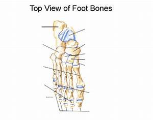 31 Label Foot Bones