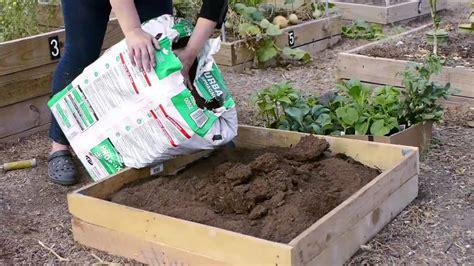 start  small vegetable garden  texas youtube
