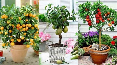 tanaman buah pot tabulampot tanah kaya