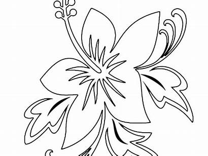 Coloring Pages Flower Exotic Advanced Tropical Beach