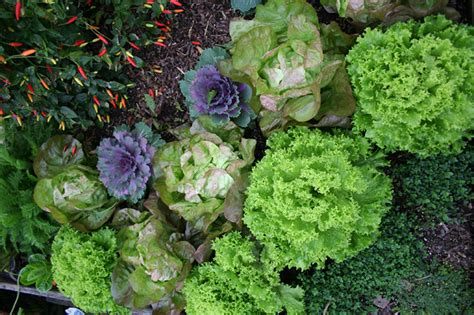 edible ornamental plants edible landscaping ornamental plants you can eat