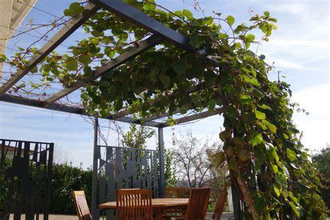 pergola v 233 g 233 tale plantes grimpantes et design naturellement associ 233 s
