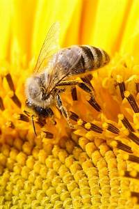 Bee Wallpaper Iphone - impremedia net