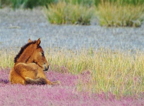 Summer Animal Wallpaper - summer horses animals background wallpapers on