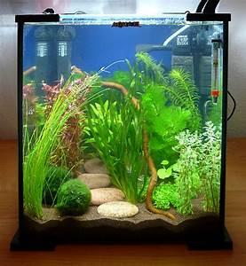 Aquarium Einrichten Beispiele : aquarium neu einrichten brauche hilfe aquaristik ~ Frokenaadalensverden.com Haus und Dekorationen