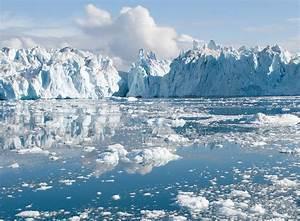 Polar Bear Facts  U0026 Conservation
