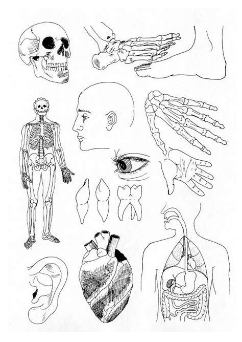 Kleurplaat Skelet Mens by Afbeeldingsresultaat Voor Kleurplaat Menselijk Lichaam