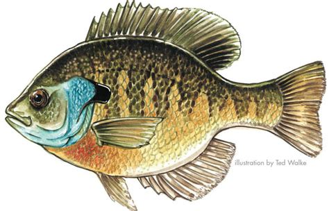 Pa Fish Environ Thon Flashcards By Proprofs